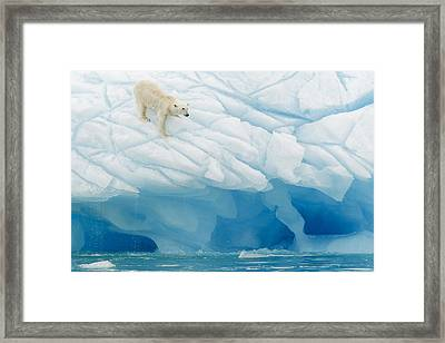 Polar Bear Framed Print by Joan Gil Raga