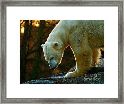 Polar Bear Framed Print by Louise Fahy