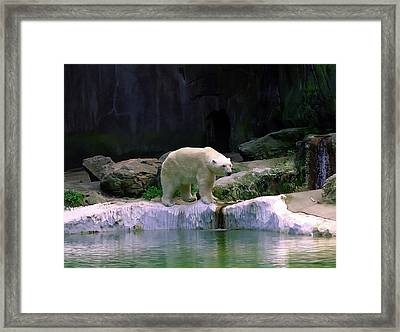Polar Bear Framed Print by Pat Carosone