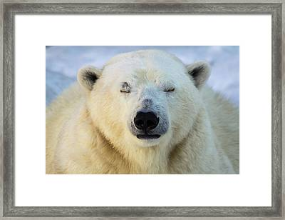 Polar Bear Portrait. Framed Print by Andrey Tsvirenko