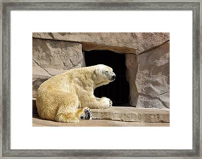 Polar Bear Prayers Framed Print