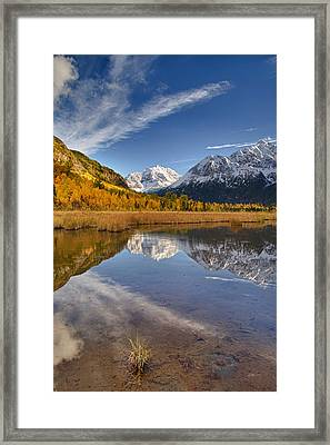 Polar Bear Reflect Framed Print by Ed Boudreau
