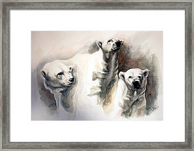 Polar Bear Study Framed Print