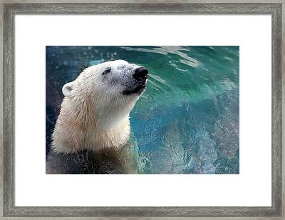 Polar Bear Up Close Framed Print