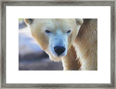 Polar Bear Wooden Texture Framed Print by Dan Sproul