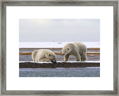 Polar Bear Zzzzzzz's Framed Print
