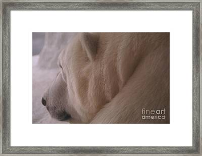Polar Dream Framed Print