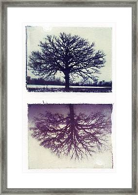 Polaroid Transfer Tree Framed Print by Jane Linders