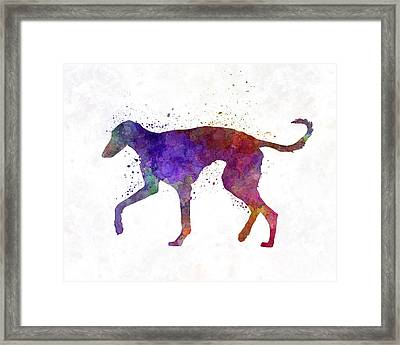 Polish Greyhound In Watercolor Framed Print