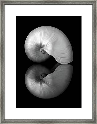 Framed Print featuring the photograph Polished Nautilus Shell And Reflection by Jim Hughes