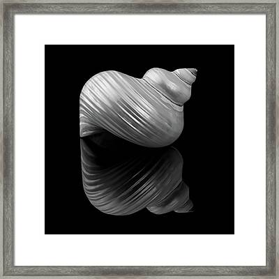Framed Print featuring the photograph Polished Turban Shell And Reflection by Jim Hughes