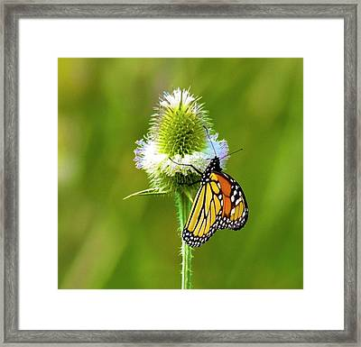 Polka Dotted Butterfly Framed Print