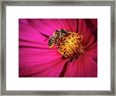 Pollen Collector Framed Print