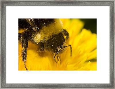 Pollen Head Framed Print by Jouko Mikkola