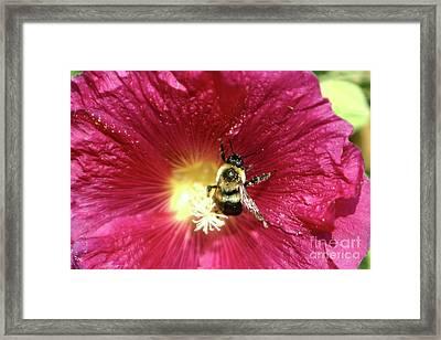 Pollen Nation Framed Print