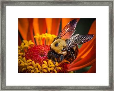 Pollen Plenty Framed Print