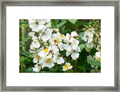 Pollenation Framed Print by Pamela Patch
