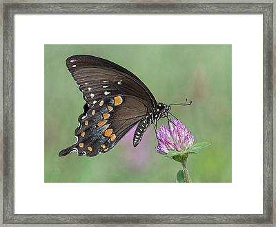 Framed Print featuring the photograph Pollinating #1 by Wade Aiken
