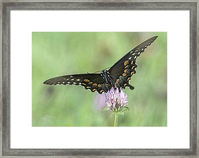 Framed Print featuring the photograph Pollinating #2 by Wade Aiken
