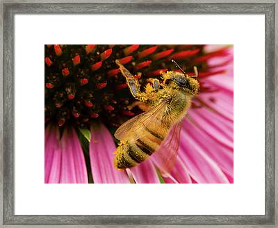 Pollinating Framed Print by Jean Noren