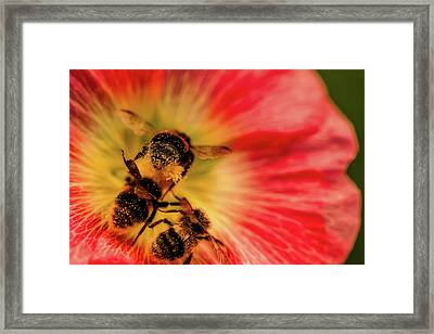 Pollination Framed Print by Verena - Timschenko