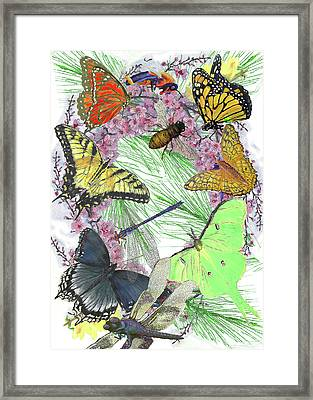 Pollinator Profusion Framed Print by Forrest C Greenslade PhD
