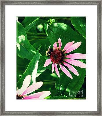 Pollinize Framed Print