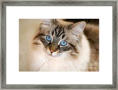 Polly Framed Print by Clayton Bruster
