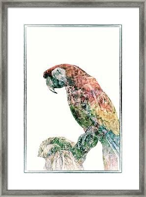 Polly Got A Cracker Framed Print by Pamela Williams