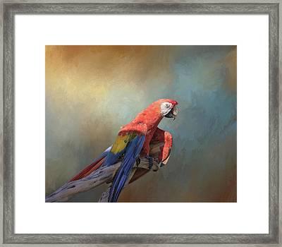 Polly Want A Cracker Framed Print by Kim Hojnacki
