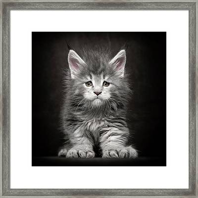 Framed Print featuring the photograph Poly Power by Robert Sijka