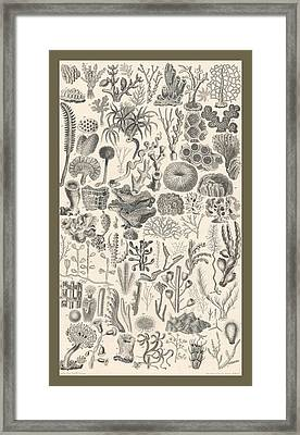 Polypi Framed Print by Dreyer Wildlife Print Collections