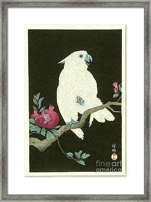 Pomegranate And Parrot Framed Print