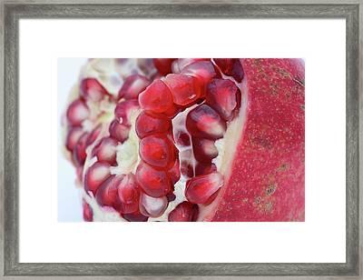 Pomegranate Framed Print by Frank Tschakert