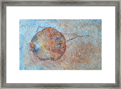 Pomegranate Seed Pod Framed Print by Diana Davenport