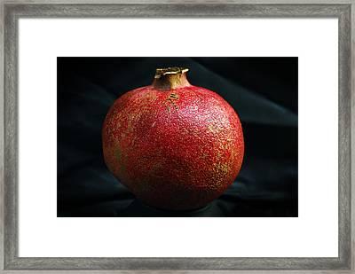 Pomegranate Framed Print by Terence Davis