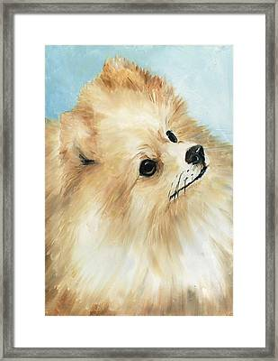 Pomeranian Framed Print by Charlotte Yealey