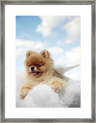 Pomeranian On Clouds Framed Print by Brandon Tabiolo - Printscapes