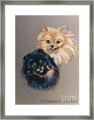 Pomeranian Pair Framed Print by Susan Herber