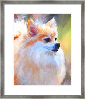 Pomeranian Portrait Framed Print