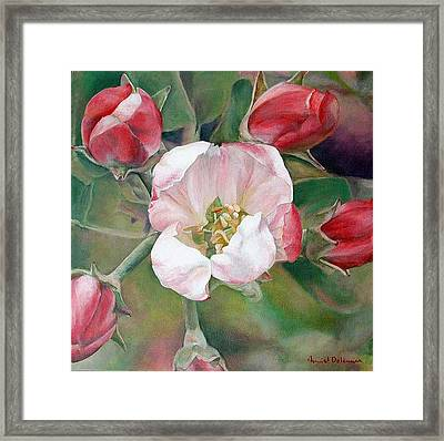 Pommier Framed Print by Muriel Dolemieux