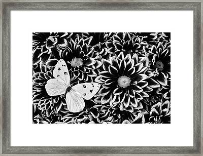 Poms And Butterfly Framed Print