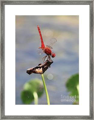 Pond Ballerina Framed Print by Carol Groenen