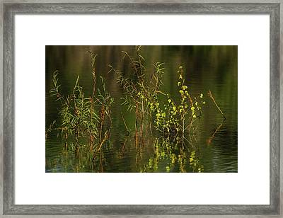 Pond Color Framed Print