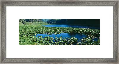 Pond Covered With Lilies Near Highway Framed Print by Panoramic Images