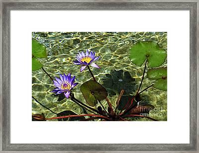 Pond Florals Framed Print
