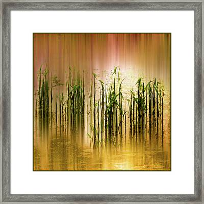 Framed Print featuring the photograph Pond Grass Abstract   by Jessica Jenney