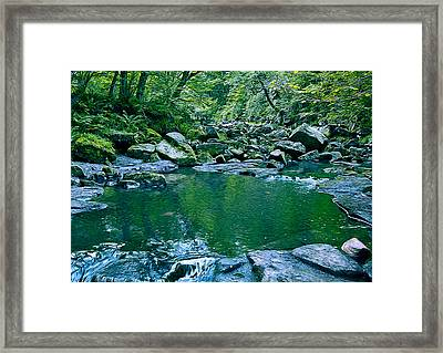 Pond In A Forest Framed Print by Svetlana Sewell