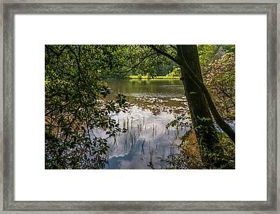 Pond In Spring Framed Print