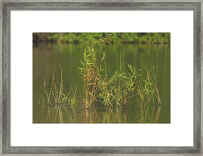 Pond Life Framed Print